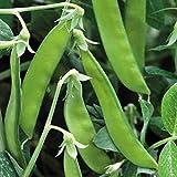 PLAT FIRM Germinación de Las Semillas: 50 - Frijoles: Semillas Norli azúcar Vaina de Guisante - mangetout Un Verdadero Verde !!! ¡¡¡¡Muy Deliciosa!!!!