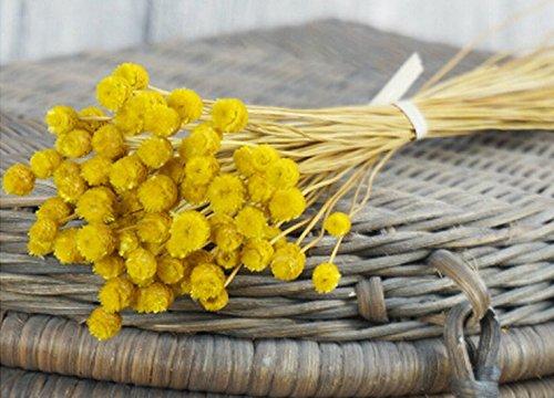 Flores artificiales secas inmortales de Danapp, 50 unidades, Amarillo, 1