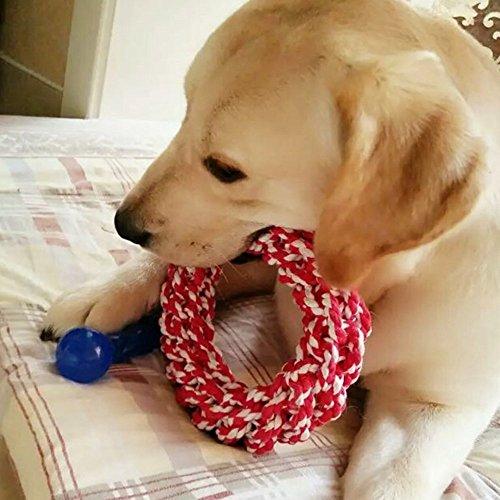 kazy『犬用おもちゃ2個セット』