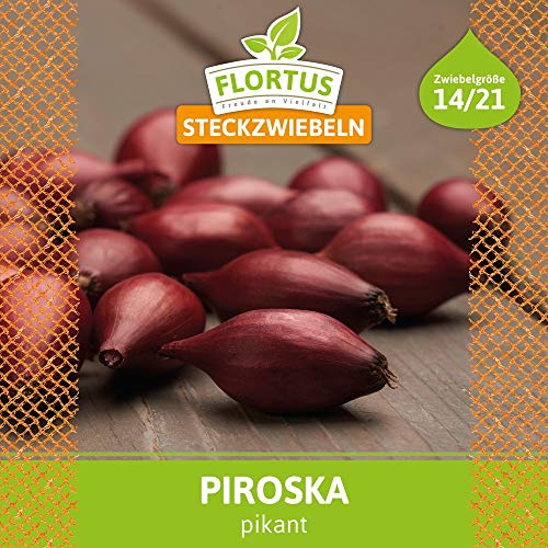 PARENT - FLORTUS 2000-0257 Steckzwiebel Piroska (250 g) (Steckzwiebeln) (1)
