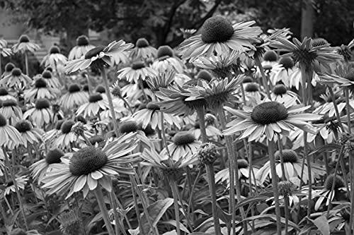 Bild Tapeten Papermoon - Papel pintado fotográfico (fieltro, impresión digital, incluye pegamento), diseño de flores, color blanco y negro