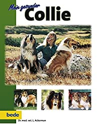 Gesunder Collie