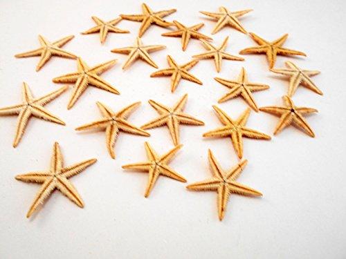 50 Medium Size Starfish - Philippine Tan Flat Sea Stars (1 1/2' / 35 - 50 mm) Beach Crafts Wedding Invitations