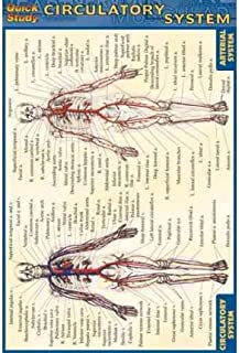 [(Circulatory System)] [Author: BarCharts Inc] published on (June, 2003)