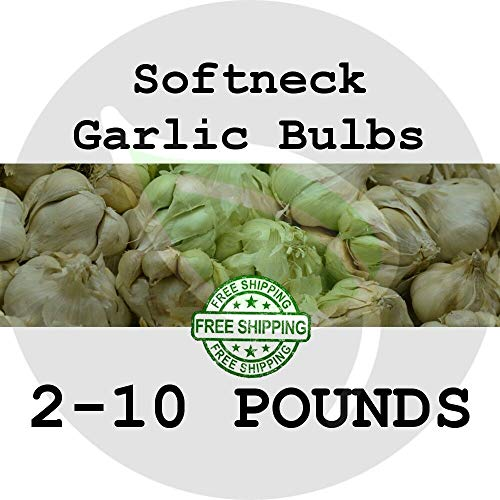 FERRY Sementi biologiche Solo Non Piante: 2 s: SOFTNECK, 2-10- Chiodi di Garofano Gourmet Garden Seed in TRAGHETTO