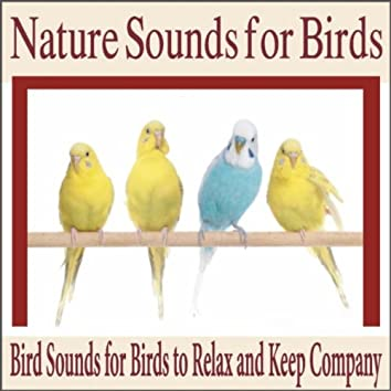 Nature Sounds for Birds: Bird Sounds for Birds to Relax and Keep Company