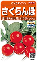 サカタのタネ 実咲野菜5372 さくらんぼ ハツカダイコン 00925372