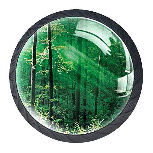 Forest Schubladengriff, Redwood Forest in Kalifornien, USA, Natur, Landschaft, Wald, Park, 4 Stück, Kunststoff, schwarz07, 35 mm