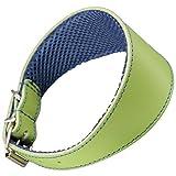 Arppe 195376050124 Collar Galgo Cuero Forro 3D Amazone, Verde y Azul
