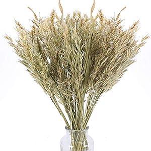XHXSTORE 50PCS Flores Secas Naturales Ramo Trigo Seco Hierba de Trigo para Jarrones Exterior Interior Hogar Mesa Balcón…