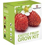 Exotic Fruit Seed Growing Kit Gift Box Grow Your Own Fruit Kit - 5 Flavours to Grow; Strawberry, Melon, Cherry Tomato, Physalis & Cucumber Seeds, Forbidden Fruit Growing Kit by Thomspon & Morgan