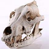 zzzddd Escultura De Escritorio,Creative Wolf Skull Escultura Esqueleto Perro Lobo De Modelo De Simulación De Resina Modelo De Cráneo Animal Home Office Bar Estatua Decoración Ornamento Artesanales