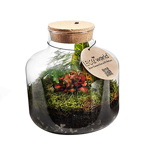 Ecoworld Jungle Biosphere Mit Beleuchtung - Komplett DIY Flashengarten Set Inklusive Pflanzen - Basic Glass Ø 22 cm Höhe 23 cm
