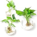 Set de 3discoid montado en la pared florero terrario de cristal las plantas de interior maceta jardín decoración de la pared