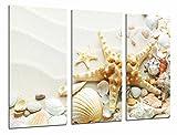 Poster Fotográfico Arena Playa con Estrella de Mar, Conchas Caracolas, Baño Tamaño total: 97 x 62 cm XXL