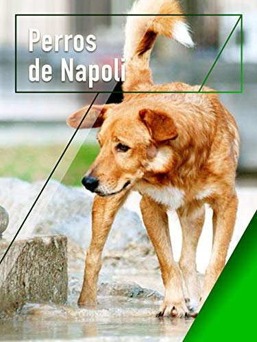 Perros de Napoli