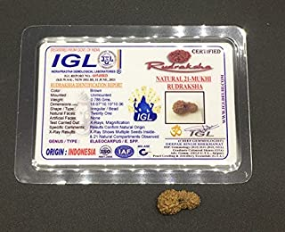 21 Mukhi Rudraksha from Java (Indonesia) Natural Twenty One Face Lord Kuber Rudraksha 18.07mm IGL Certified Exact Bead