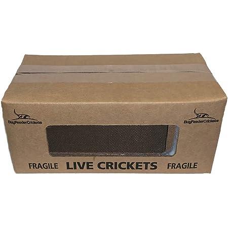 "BuyFeederCrickets 500 Live Acheta Crickets (Medium (1/2""))"