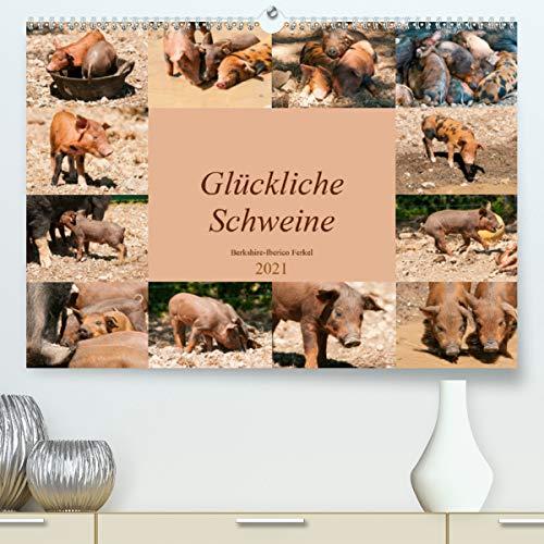 Glückliche Schweine Berkshire-Iberico Ferkel (Premium, hochwertiger DIN A2 Wandkalender 2021, Kunstdruck in Hochglanz)