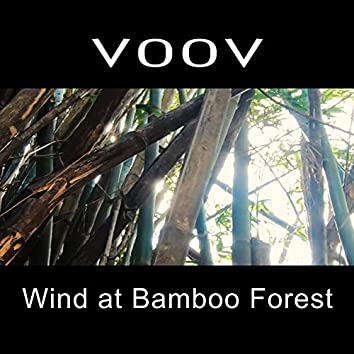 Wind at Bamboo Forest