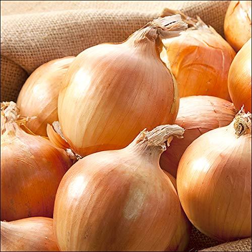 北海道産 玉ねぎ 黄玉葱 3kg たまねぎ タマネギ 玉ネギ 野菜 北海道 お取り寄せ