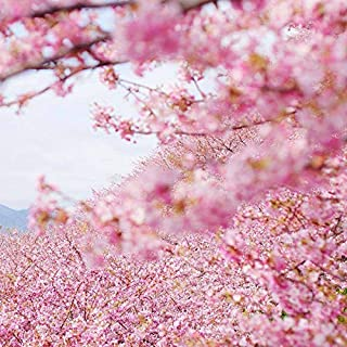 Best japanese cherry tree planting Reviews
