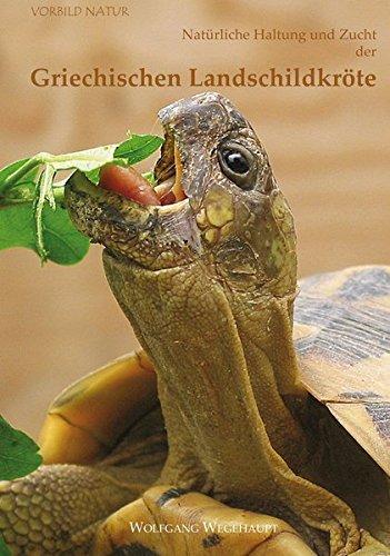 Natürliche Haltung und Zucht der Griechischen Landschildkröte