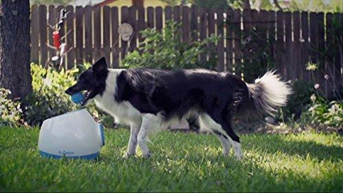 iFetch Too Automatic - Lanzador de Bolas para Perros más Grandes