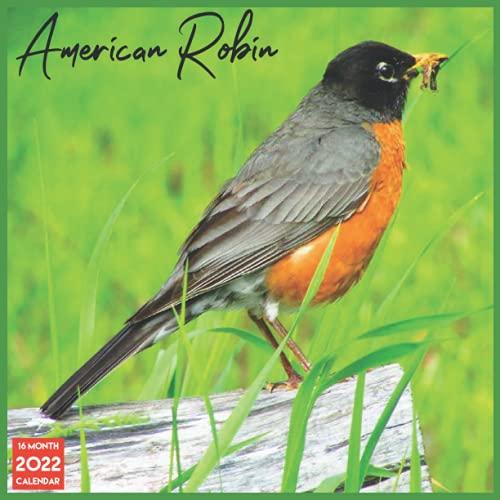 American Robin Calendar 2022: Official American Robin Calendar 2022 16 Months