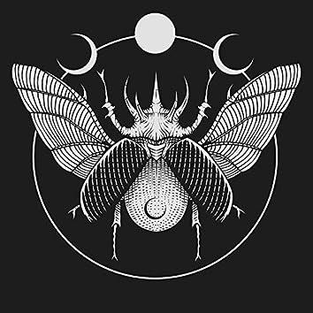 6lack beetle