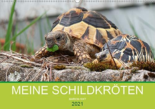 Meine Schildkröten (Wandkalender 2021 DIN A2 quer)