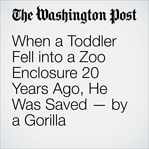 When a Toddler Fell into a Zoo Enclosure 20 Years Ago, He Was Saved — by a Gorilla cover art
