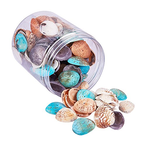 PandaHall Elite - Lot de 1 Boite Coquillage Perle Teintee Perles en Coquille, Couleur Melangee, 32-37x20-29x8-10mm, Trou: 1mm, Environ 100-120pcs/Boite