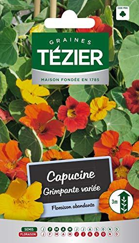 Tezier - Capucine grimpante variée - Fleurs annuelles