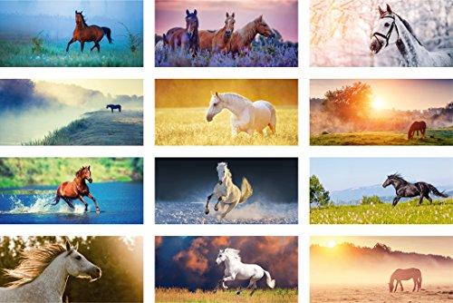 Postkarten-Set Pferde | 24 Postkarten - 12 unterschiedliche Motive | im Panorama-Format 21 x 9,8 cm | ideal für Pferdefans, Vielschreiber und Postcrossing