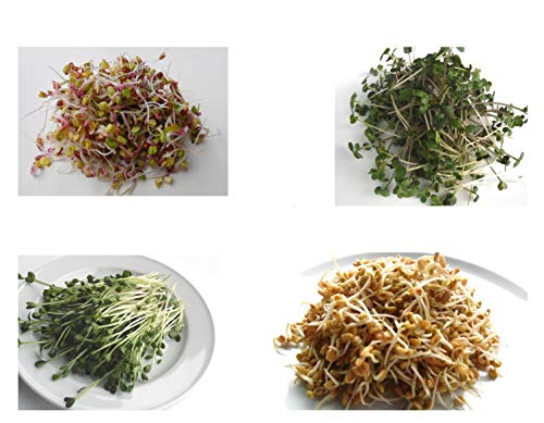 400 g BIO Keimsprossen Mischung -HOT MIX- Keimsaat 4 x 100 g Samen für die Sprossenanzucht Radies, Senf, Daikon-Rettich, Bockshornklee Sprossen Microgreen Mikrogrün