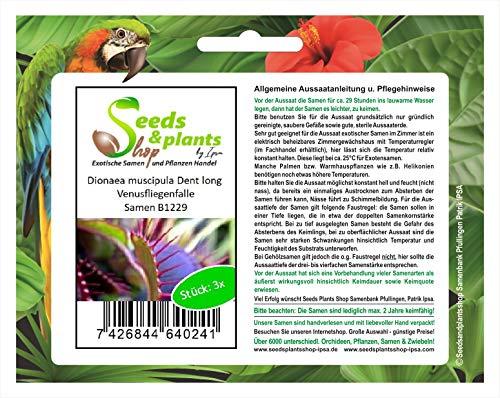 Stk - 3x Dionaea muscipula Dent long Venusfliegenfalle Pflanzen - Saat B1229 - Seeds Plants Shop Samenbank Pfullingen Patrik Ipsa