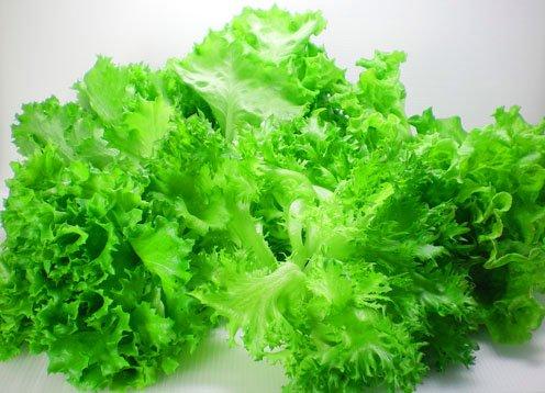 【洗わなくていい野菜】4種リーフレタスミックス 500gパック 業務用 ご家庭 パーティーに