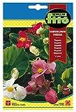 Semillas Fitó 660 - Semillas de Begonia Semperflorens Variada