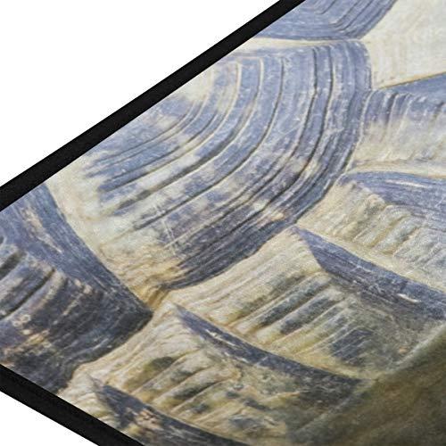 XiangHeFu Teppiche Griechische Schildkröte Testudo Graeca Ibera Weiche 39x20 Zoll Fußmatten Teppich Personalisierte Matte für Küche Wohnzimmer Esszimmer Schlafzimmer Dekorativ