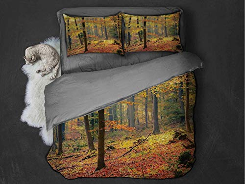 Forest Comfort Luxurious Softest Premium Bed Sheet Set Colorful Autumnal Forest With Warm Hazy Foggy Nature Picture Print Anti-wrinkle and anti-fading (King) Green Orange and Yellow