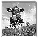 Impresionantes pegatinas cuadradas (juego de 2) 10 cm BW – Cool Dairy Cow Friesian Fun Decals para portátiles, tabletas, equipaje, reserva de chatarras, frigoríficos, regalo genial #36512