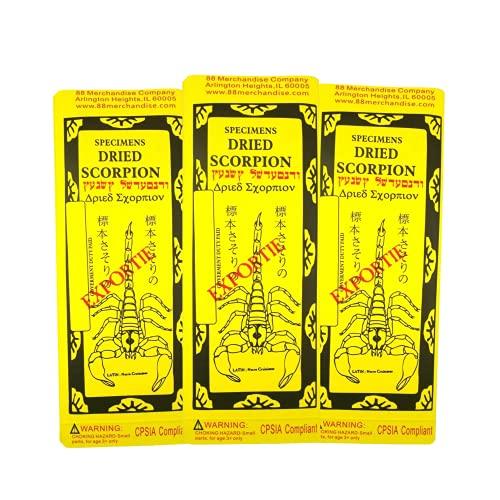 Scare Prank, Novelty Dried Scorpion Specimen Noise Making Practical Joke, Set of 3