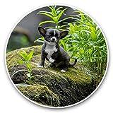 Impresionantes pegatinas de vinilo (juego de 2) 7,5 cm – Bebé Chihuahua perro cachorro lindo calcomanías divertidas para portátiles, tabletas, equipaje, reserva de chatarras, neveras, regalo fresco #44196