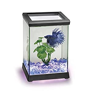 Ocean Free AT619A Kit Betta Space Led, Negro