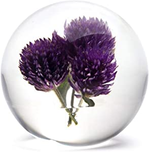 Dynasty Gallery FloraCulture Paperweight Globe Amaranth Purple