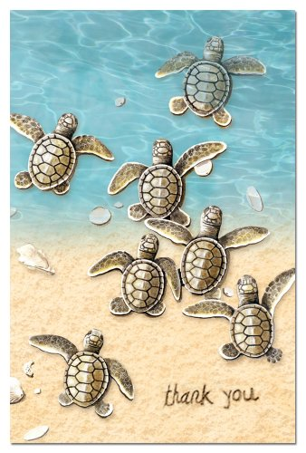 Tree-Free Greetings 94610 ECOnotes Thank You Card Set, 4 x 6 Inches, 12 Count Cards with Envelopes, Baby Turtle