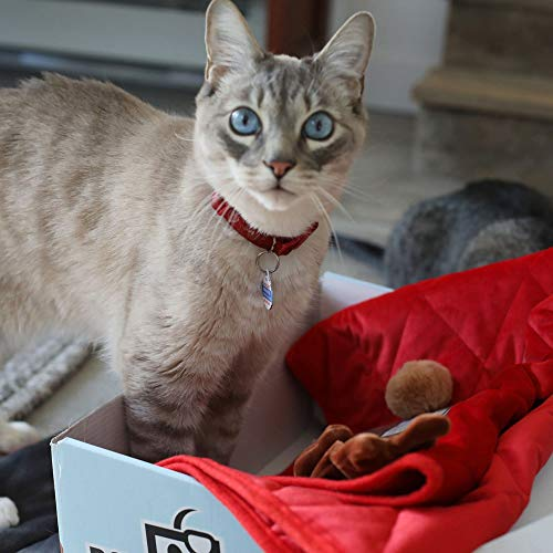 BoxCat Seasonal Cat Subscription Box – 4 GIANT Boxes Per Year with cat treats and cat toys: 2 Luxury Items