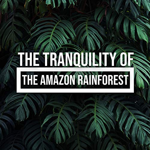 The Tranquility of the Amazon Rainforest