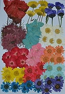 LoveDiyLife Multiple Dried flowers, Pink Larkspur, Mini Rose, Hydrangea, Daisy, real pressed dried flowers